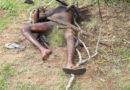 Dois corpos em decomposição encontrados em uma fazenda no Município de Conceição Coité