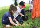 Alunos plantam citronela para afastar mosquitos da dengue